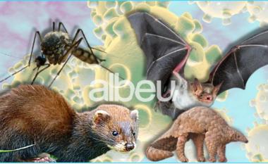 Kafshët që transmetojnë viruse te njerëzit