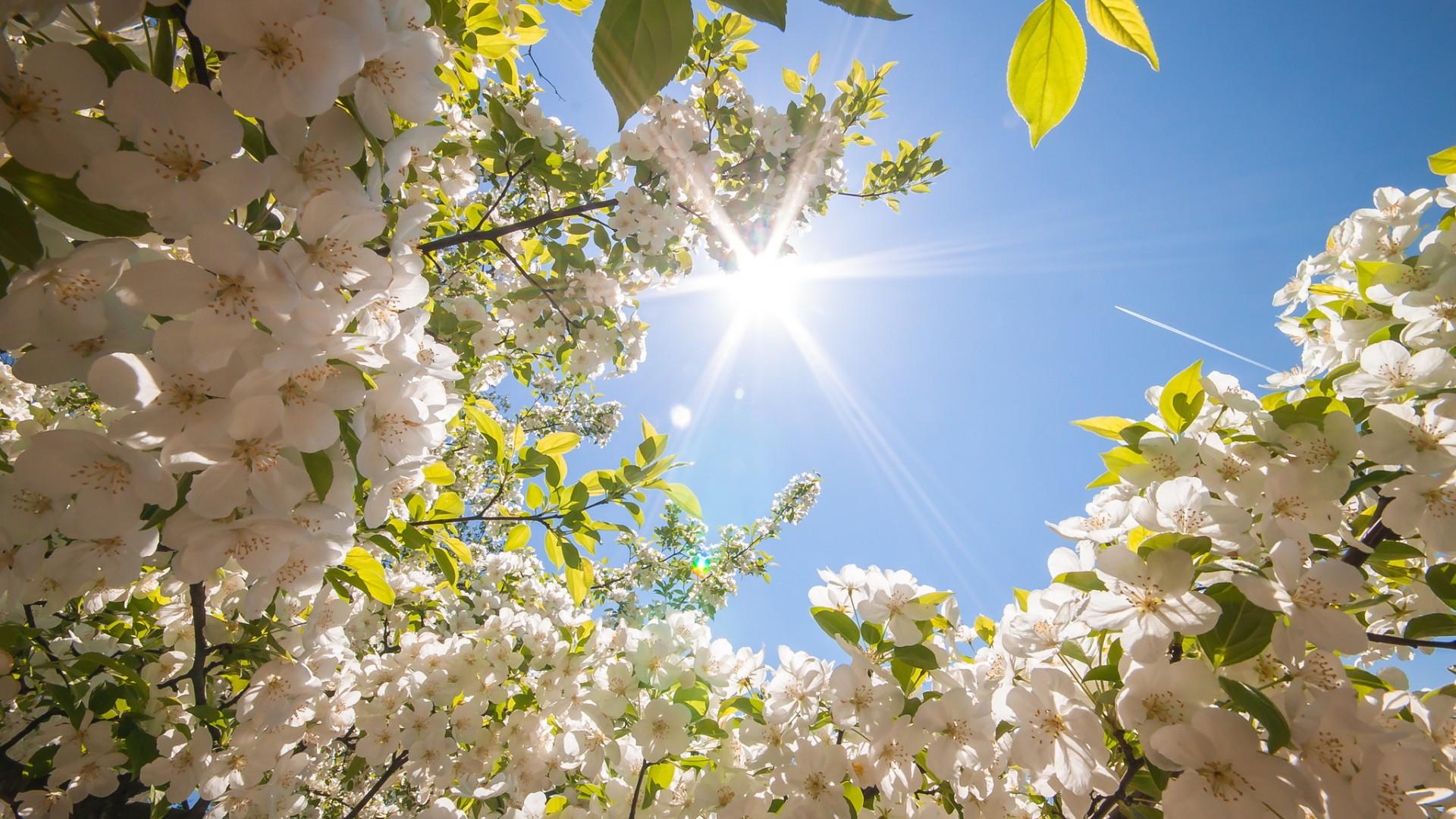 Kur do të vijë pranvera? Sot priten sërish reshje