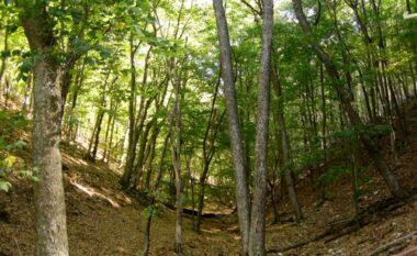 Po priste dru në pyll, vdes 55 vjeçari