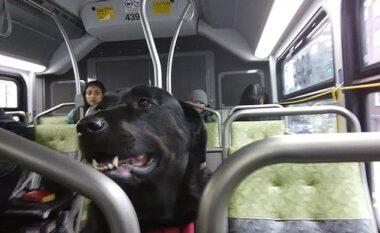 Me abone të lidhur në qafë, qenushja udhëton e vetme me autobus për të shkuar në park çdo ditë