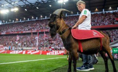 """""""Ne vajtojmë akoma për Henes"""", klubi i Bundesligës qan ende për ngordhjen e dhisë (FOTO LAJM)"""
