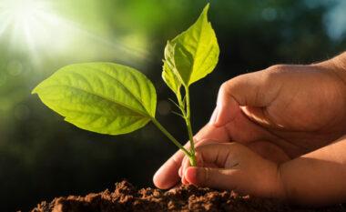 Dita e Tokës, 4 gjëra të thjeshta që mund të bësh për t'i ardhur në ndihmë