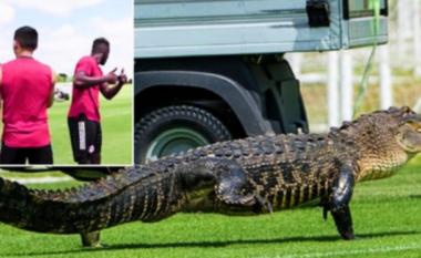 Aligatori shfaqet në fushë dhe frikëson lojtarët (VIDEO)