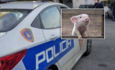 Mos qeshni: Në Vlorë plas kallashi, por policia kap hajdutin e gicit