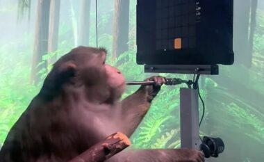 Eksperimenti i majmunit që luan videolojëra është financimi më i fundit i Elon Musk