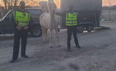 Kushtonte 50 mijë euro, policia maqedonase gjen kalin që u vodh ditë më parë