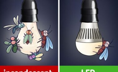 6 arsyet përse shtëpia jote preferohet nga insektet dhe si të shpëtosh prej tyre (FOTO LAJM)