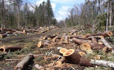 U kapën duke prerë dru ilegalisht, një i arrestuar dhe dy të proceduar në Kolonjë
