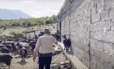 """Ecën 30 kilometra, bariu vlonjat që nuk pranon të dalë në """"pension"""" (VIDEO)"""