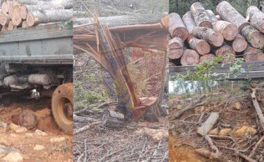 U kapën duke prerë dru, arrestohen dy vëllezërit në Bulqizë