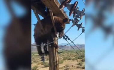 Ariun e zë gjumi në majë të shtyllës elektrike, ndërpritet energjia (VIDEO)
