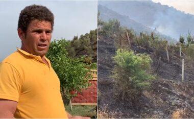 Digjen 200 rrënjë ullinj në Sarandë, banori: Zjarrvënie e qëllimshme