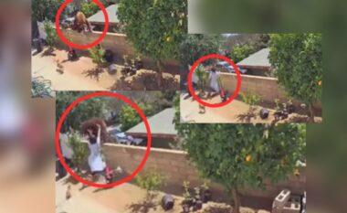 Ariu i sulmoi qentë, shikoni si gruaja guximtare e hedh nga muri (VIDEO)