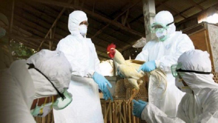 Gripi i shpendëve, bashkia Shkodër ndalon tregtimin në mjedise të hapura