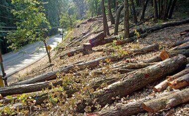 Procedohen penalisht dy inspektorë pyjesh në Dibër për shpërdorim detyre