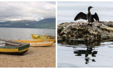 BBC jehonë liqenit të Ohrit: Peshkatarët në luftë me nevojën për të shpëtuar koranin