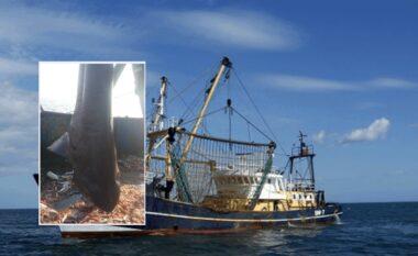 Peshkatarët durrsakë kapin në thellësi peshkaqenin 650 kg (FOTO LAJM)