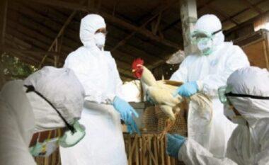 Shënohet rasti i parë i gripit të shpendëve në Shkodër, asgjesohen 130 krerë pula