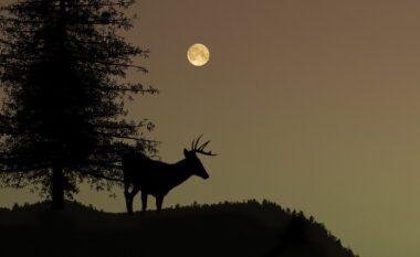 Misteret e Hënës së plotë të 23 korrikut, çfarë duhet të bëni sot?