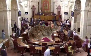 Miu hyn në Parlament, deputetët spanjollë tmerrohen dhe ikin me vrap (VIDEO)