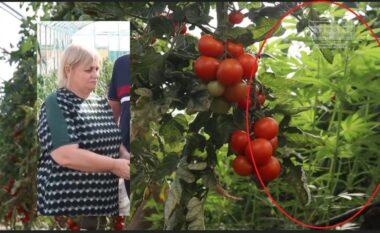 Kanabisi në serrën ku ishte Ekonomi, reagon ministria e Bujqësisë: Janë mbjellë për eksperiment (VIDEO)