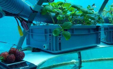 Rihapet ferma e parë nënujore në botë