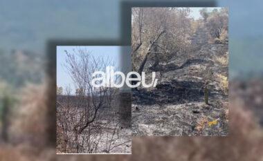 Zjarri i shkrumboi ullishtën, banorët në Kurbin kërkojnë dëmshpërblim