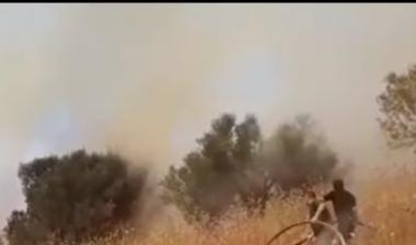 Një tjetër vatër aktivizohet në Fier, rrezikohen fushat e mbjella me ullinj në fshatin Vjosë