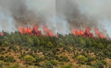 U rrezikuan 5 banesa, kryetarja e Bashkisë Kurbin jep lajmin e mirë: Zjarri nën kontroll!
