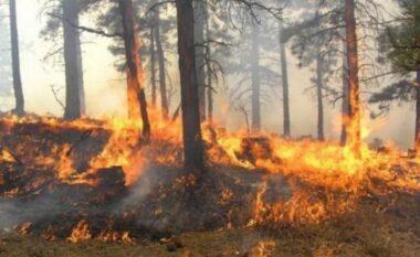 Rritet kërcënimi nga zjarret, IGJEUM: Fieri, Vlora dhe Gjirokastra, qarqet më të rrezikuara!
