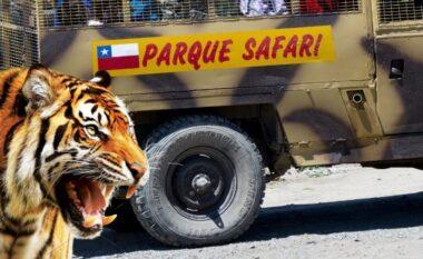 E rëndë, tigri sulmon për vdekje punonjësen e parkut