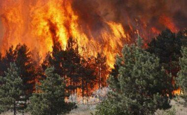 EMRI/ I vuri zjarrin Parkut Shebenik-Jabllanicë, shpallet në kërkim autori i dyshuar
