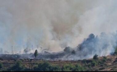 Zjarr masiv në pyjet e Pogradecit, dëmtohen flora e fauna