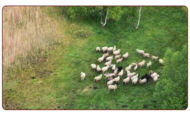 A e dalloni dot ujkun që ka si qëllim të hajë tufën me dele?