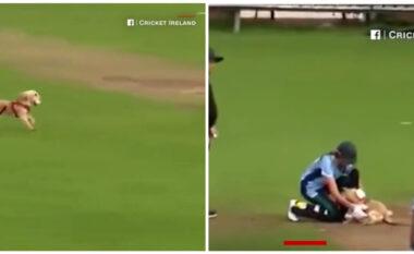 """Qeni """"vjedh"""" shfaqjen në gjysmë-finalen e kriketit, dhuron show me topin (VIDEO)"""