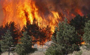 """Zjarri """"djeg"""" Qafë Plloçën, dëme të pallogaritshme"""