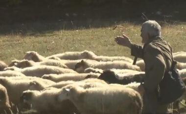 I vodhi grekut 40 krerë bagëti dhe i solli në Shqipëri, arrestohet çobani