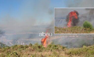 Zjarr masiv në Vajkan të Fierit, rrezikohen ullinjtë 20-vjeçarë (VIDEO)