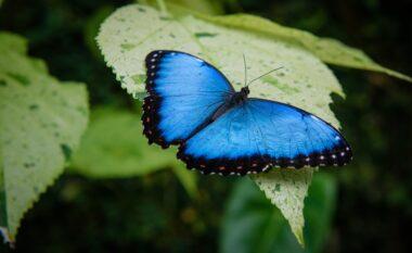 Sipas ngjyrave, mesazhi hyjnor që ju sjellin fluturat
