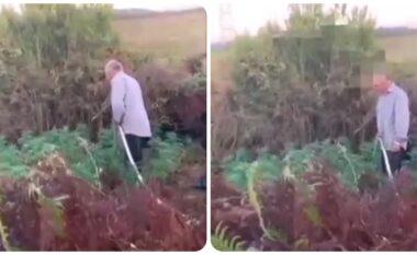 Policia e kap në flagrancë duke ujitur kanabisin, reagimi epik i të moshuarit (VIDEO)