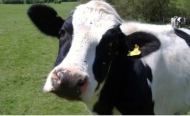 Zelanda e Re trajnon lopët për të shkuar në tualet, arsyeja do t'ju çudisë