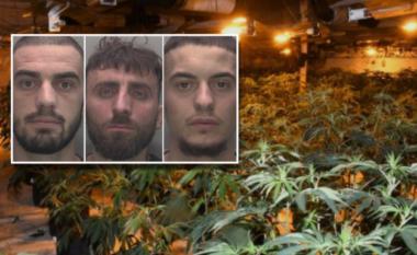 Kishin shndërruar një shtëpi në fermë kanabisi, arrestohen 3 shqiptarë në Britani