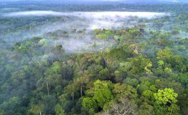 Facebook do të nisë fushatë kundër shitjes ilegale të pyjeve tropikale të Amazonës