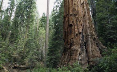 Studimi: Aktiviteti njerëzor po bën pyjet të emetojnë karbon për shkak të ndryshimeve klimatike