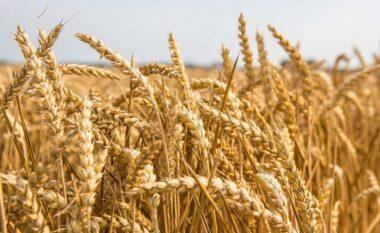 Çmimi i grurit të zhdoganuar rritet edhe 6%; Si do të reflektohet në tregun vendas