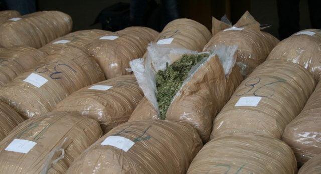 Aksioni anti-drogë në Lezhë, kapet një sasi e konsiderueshme kanabisi
