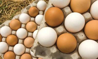 Sa vezë mund të hani në 1 javë për shëndetin e organizmit